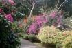 jardin-deshaies-09