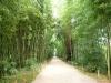 bambouseraie-01