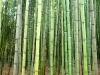 bambouseraie-12