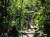 11-foret-tropicale
